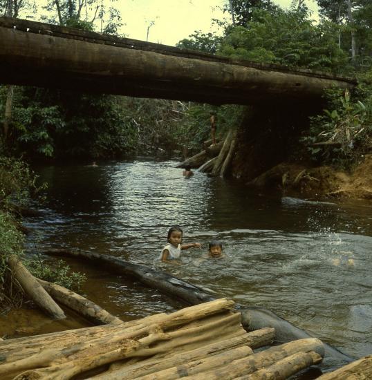 1982 guyane cacao101