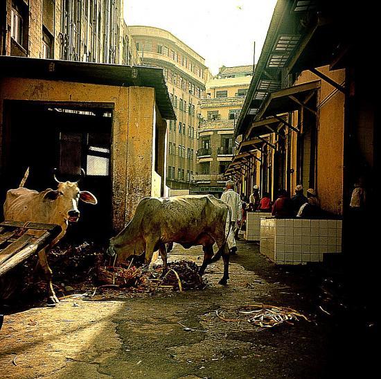 4 vaches sacrees bombay